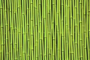 grüner Bambus. Bild kann als Hintergrund verwendet werden foto