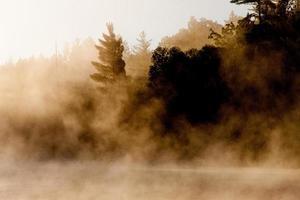dichter Nebel foto