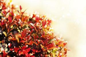 gelber Herbstlaubhintergrund, sehr flacher Fokus, Makrofotografie