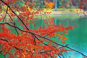 Farbzweige von Bäumen im Herbst foto