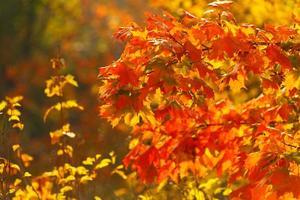 helle Herbstblätter in der natürlichen Umgebung