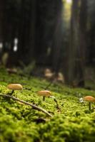 kleine Pilze foto