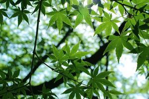 Sonnenlicht durch zartes Grün foto