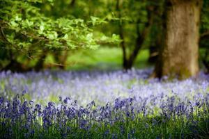 Glockenblumen aus Eichenholz