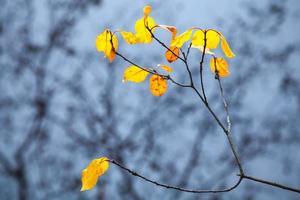 herbstliche gelbe Blätter auf Küstenbaum mit Reflexionen foto