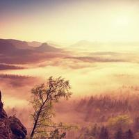 Feen-Tagesanbruch. nebliges Erwachen in wunderschönen Hügeln.