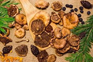 Pilze mit Tannenzweigen foto