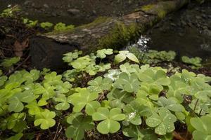 Nahaufnahme von Pflanzen in Muir Wäldern foto