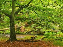 Herbst Gebirgsfluss, bunte Blätter von Ahorn, Buchen foto