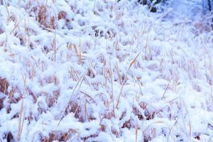 Schnee, Schneeszene, mit Schnee bedeckt in Japan foto