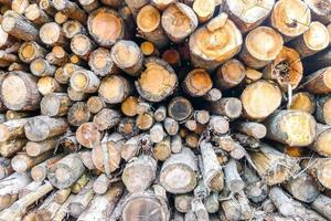 Holzstämme Hintergrund