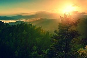 tiefes nebliges Tal bei Tagesanbruch. Herbst nebliger und nebliger Morgen