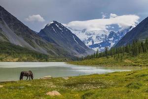 Berglandschaft mit grasenden Pferden foto