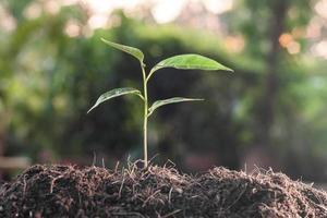 junge Pflanze wächst auf braunem Boden foto