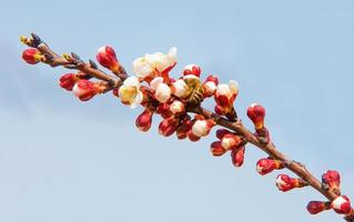 Frühlingsbäume in voller Blüte