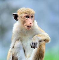 Affe in der lebendigen Natur foto