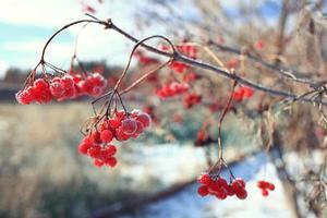 Zweige bedeckt mit Schnee Winter Schneefall Hintergrund