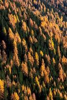Laub im Wald foto