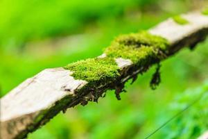 Nahaufnahmebaum mit grünem Moos bedeckt. draussen.