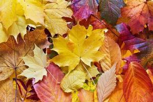 bunte Herbstherbstblätter foto