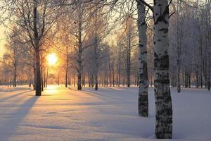 Winterlandschaft mit weißen Birken und der Sonne durch die Bäume. foto
