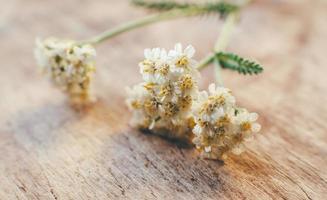 Sprossenwiese blüht im Frühjahr foto
