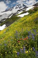 mt. Bäcker Wildblumen foto