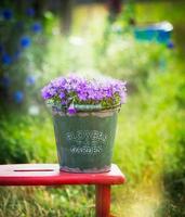 Eimer mit Gartenglockenblumen auf rotem Hocker, im Freien foto