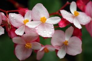 Gebirgstau und Blume foto
