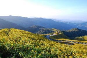 gelbe Blumen auf dem Berg foto