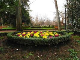 Gehen Sie in den Park in der Nähe der Blumen foto