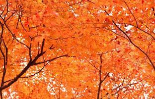 Herbstfarben in Japan / schöne Herbstblätter