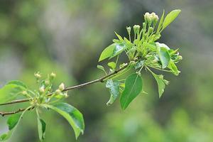 grüne junge Blätter Hintergrundzweigblätter foto