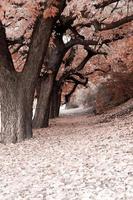 Herbst Weg foto