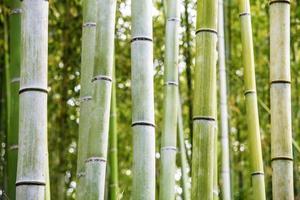 der Bambushain in Arashiyama foto
