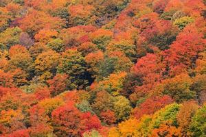 Feld von Bäumen von oben während Herbstlaub.