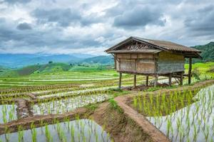 Reisfelder am Berg.