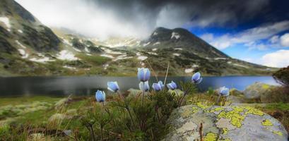 Frühlingsblumen in den Bergen foto