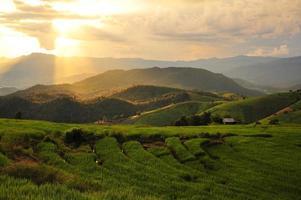 Reisfelder am Berg