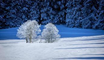 Winter in den bayerischen Bergen foto