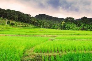 thailändischer Reis abgelegt foto