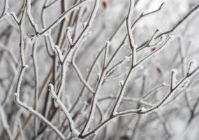 gefrostete Zweige