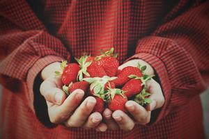 Person, die Erdbeeren hält foto