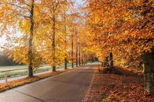 Herbst in den Niederlanden foto