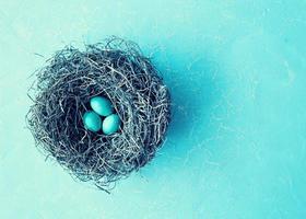 Eier im Nest foto
