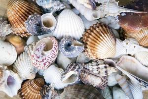 verschiedene Muscheln stapelten sich wie ein Hintergrund foto