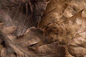 Herbstblätter Hintergrund