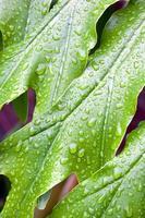 abstrakte Nahaufnahme des grünen Pflanzenblattes mit Wassertropfen foto