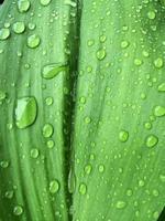 Blatt mit Wassertropfen als Hintergrund.