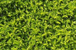 Pflanzen. foto